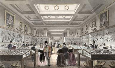 British Museum, Zoological Gallery