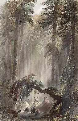 A Forest Scene